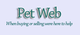 Petweb - pets for sale, dogs for sale, puppies for sale, cats for sale, kittens for sale